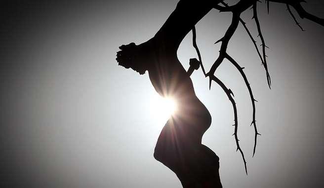 Jesus-Tree_3